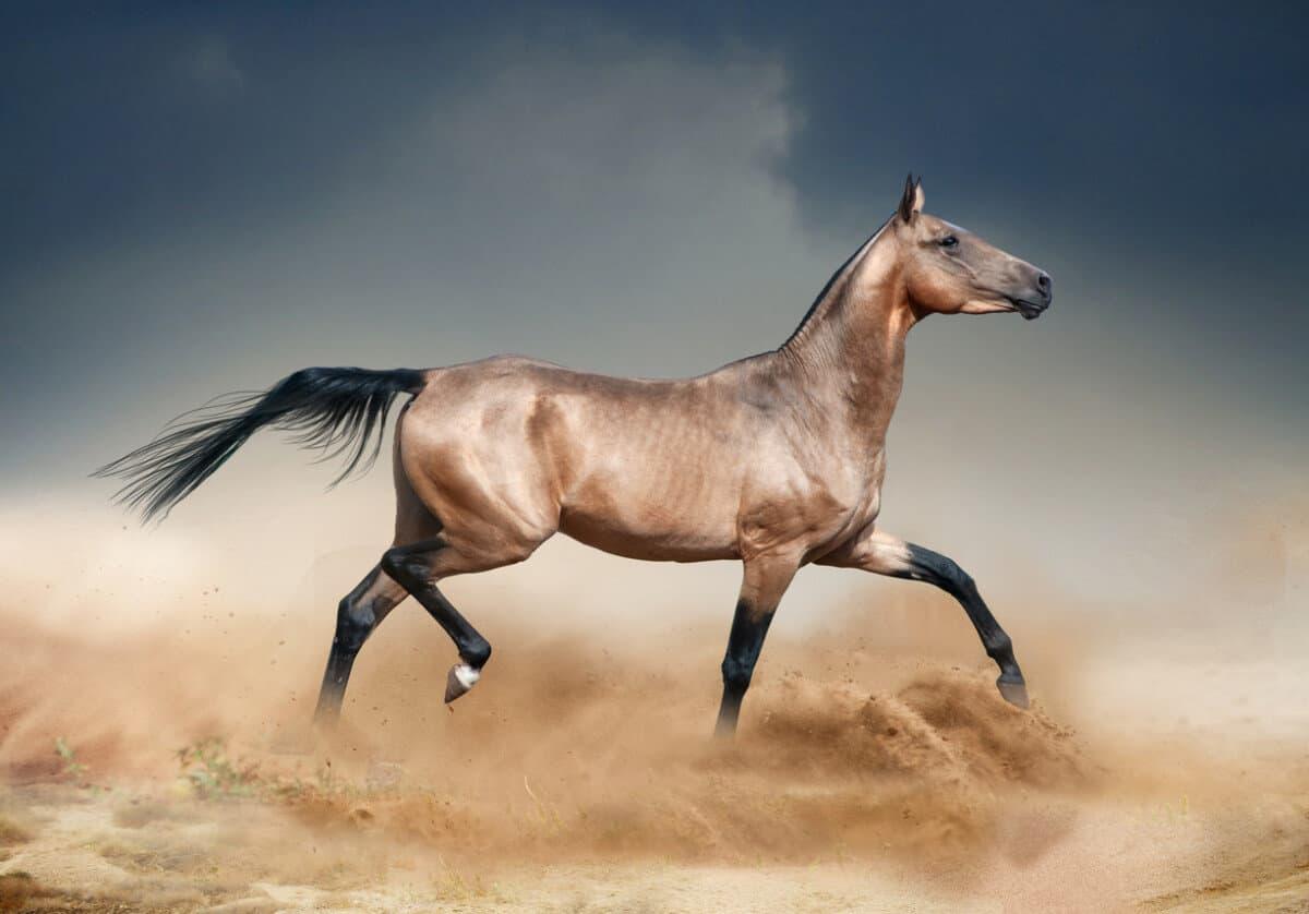 تعرف على أجمل أنواع الخيول